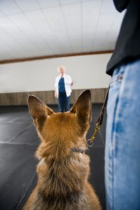 Dog looking at obedience class teacher